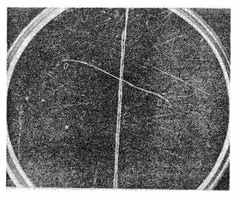 деление ядра урана в камере Вильсона